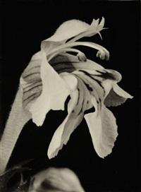 plants (6 works) by ernst fuhrmann