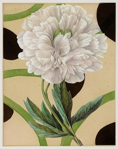 peony with vines by dan rizzie