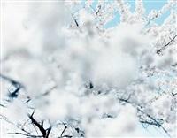 sakura 10,4-66 by risaku suzuki