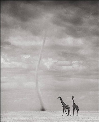 giraffes and dust devil, amboseli by nick brandt