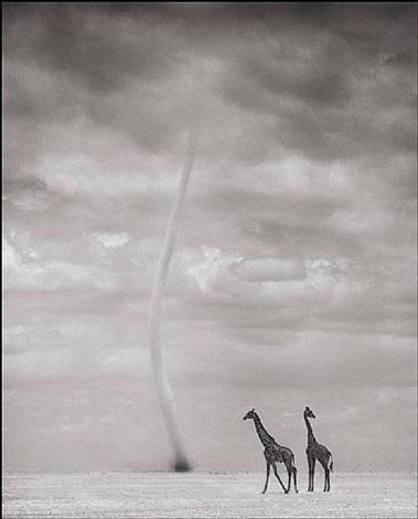 giraffes and dust devil, amboseli by nick brandt