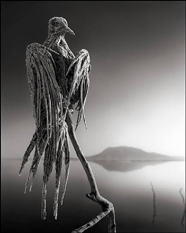 calcified caped dove, lake natron by nick brandt