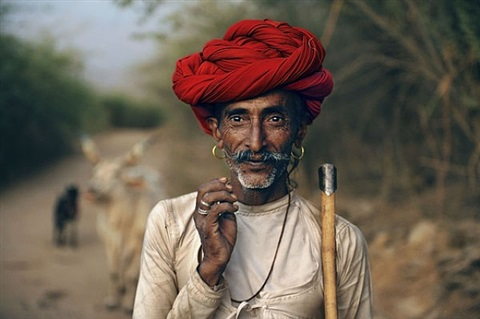 pleased with his day, a rabari herdsman leads his animals to the spot where they'll bed for the night. he'll sleep with them outdoors on a simple cot called a charpoy. rajasthan, india. by steve mccurry