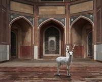 the witness by karen knorr