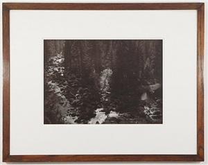 a premonitional work, (the burning tree), lassen national park, shasta county, california by thomas joshua cooper