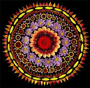 cosmos sun by portia munson