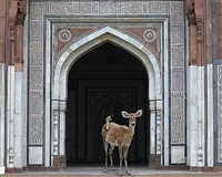 the messenger, purana quila, new delhi by karen knorr