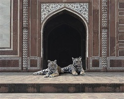 at the edge of the forest, agravena, agra by karen knorr