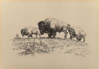 buffalo by harold dow bugbee