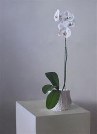orquidea ii by peter von artens