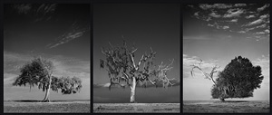 little everglades triptychon #1 by holger eckstein
