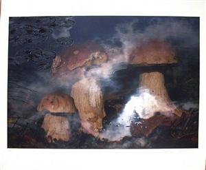 pilze in wasser by peter fischli and david weiss