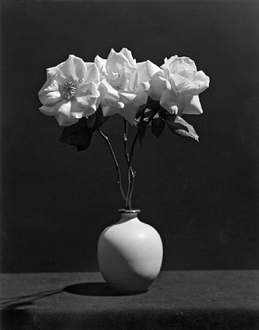 rose (map#1049) by robert mapplethorpe