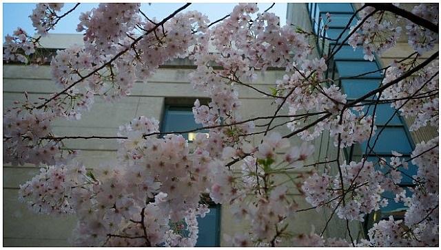 sinsheimer's spring by ricardo leitao