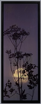 low moon hogweed by susan derges