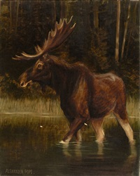 moose by alexander pope