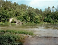 cahaba river, alabama, june 1999 by william christenberry