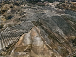 olive groves #3, jaen, spain, 2010 by edward burtynsky