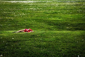 field of dreams by david drebin