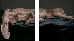composed for the ear as well as the eye by william wegman