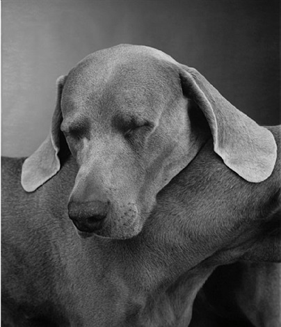 head with base by william wegman