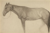 horse (study) by carl link