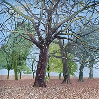 springfield park, late november by annie ovenden