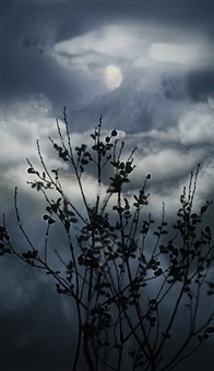 gibbous moon willow by susan derges