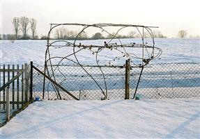 brombeerranken im schnee, holzheim by simone nieweg