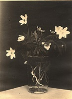flowers (ostern) by ilse bing