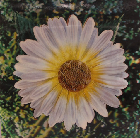 untitled daisy by andy warhol
