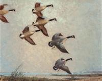 canada geese by reveau mott bassett