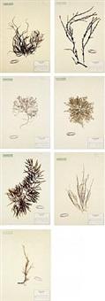 herbarium by mark dion