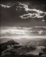cheetah and cubs lying on rock, serengeti by nick brandt