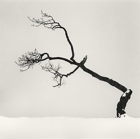 kusharro lake tree, study 6, kota, hokkaido, japan by michael kenna