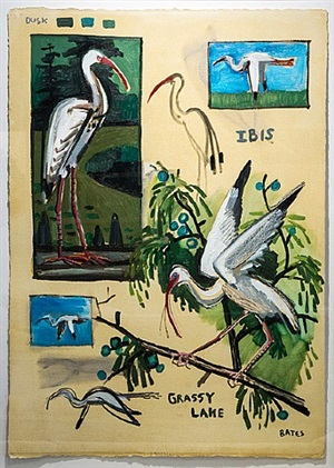 ibis - grassy lake by david bates