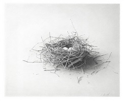 nest #5 by skip steinworth
