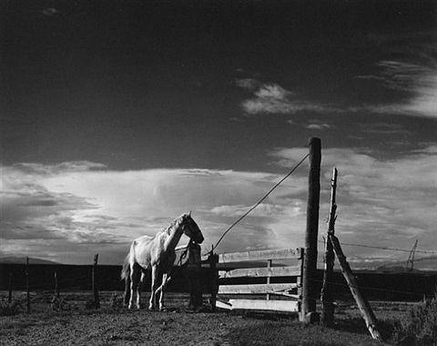 white horse, rancho de taos, new mexico by paul strand