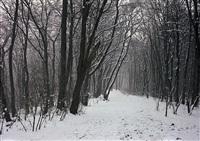 frölenberg i (verschneiter buchenwald), bielefeld by simone nieweg