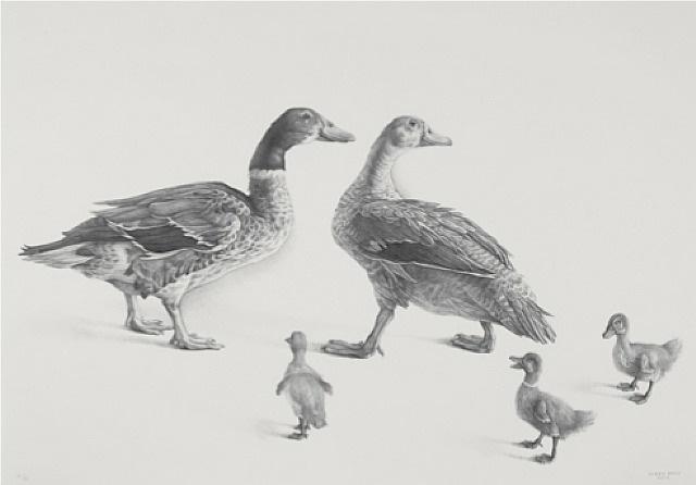 familia de gansos by claudio bravo