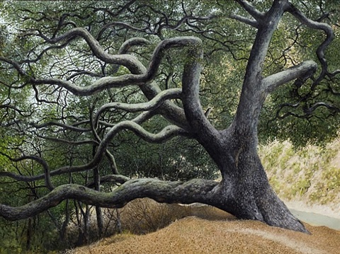 oak tree in rattlesnake canyon by james blake