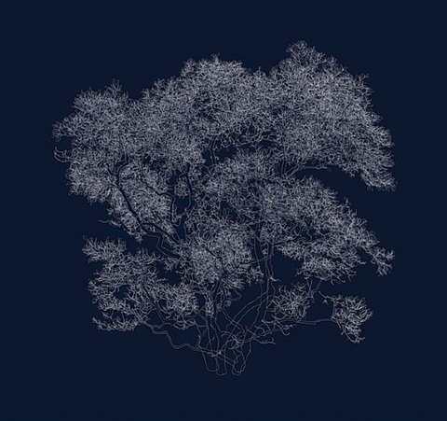 "38º 36' 49.57""n, 90º 15' 31.6""w (star magnolia) by andrew millner"