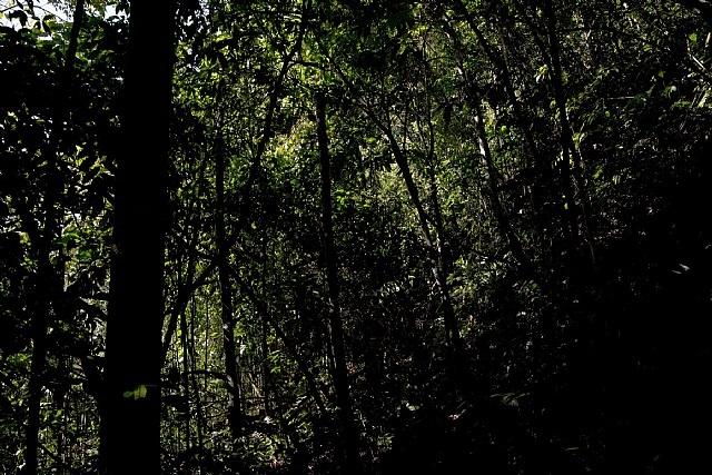 dark forest b by sergio vega