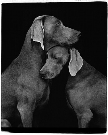 friends by william wegman