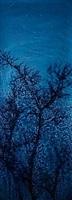 star field hawthorne by susan derges