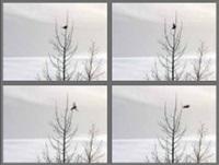 one bird, one tree by lohner carlson