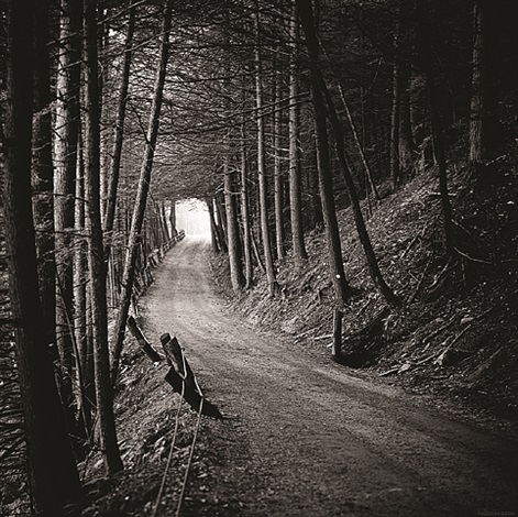road in the woods by paul hagedorn