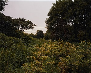 july 17, 2006, the east meadows, northampton, massachusetts by joel sternfeld