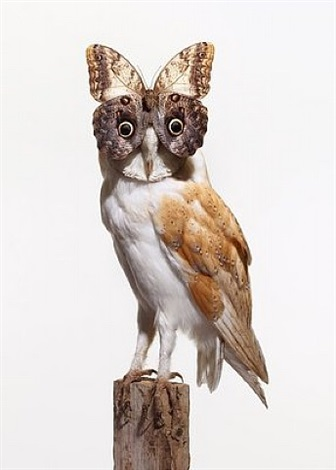 owl with butterfly (white) by nancy fouts