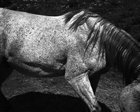 untitled (horse) by whitney hubbs